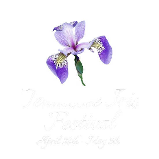 Tennessee drawing louisiana iris. Event schedule festival about
