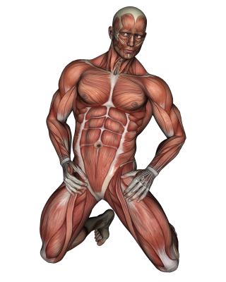 Transparent muscles fatigued. The difference between muscle