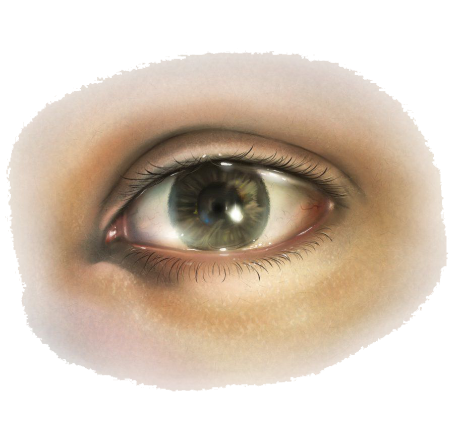 Images free download eye. Eyes l png vector library download