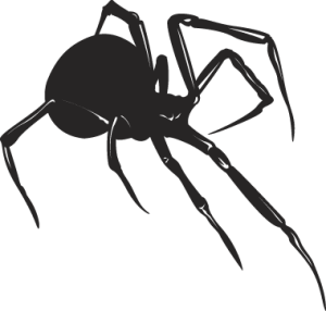 Spiders drawing black widow spider. Morgan termite and pest