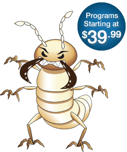 Termite drawing home florida. Control services jacksonville and