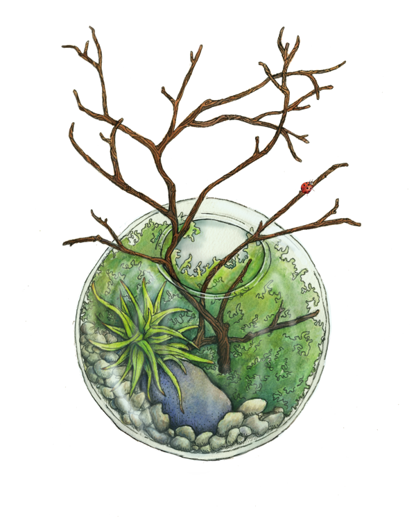 Terrarium drawing moss fern. By lauren stenger via