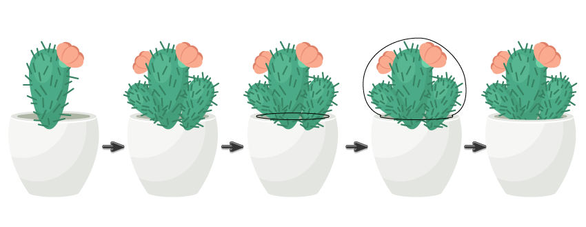 Terrarium drawing cactus. How to create a