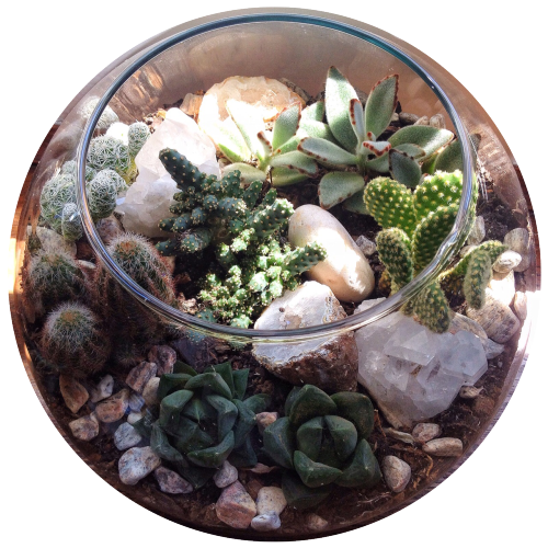 Terrarium drawing mini garden. For lovers only instagram