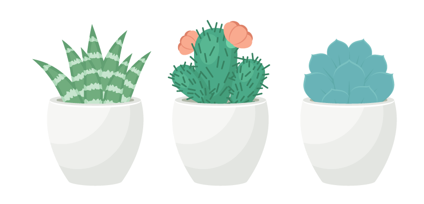 Terrarium drawing side view. How to create a