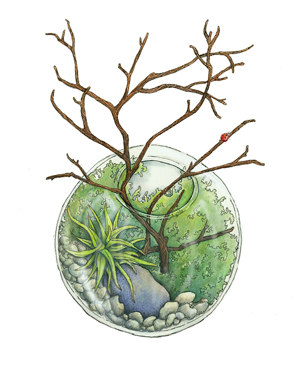 Terrarium drawing watercolor. On scad portfolios