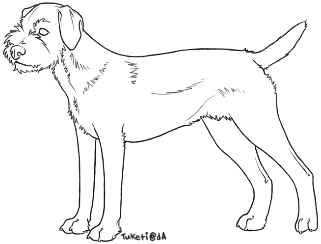 Terrier drawing line. Free lines border by
