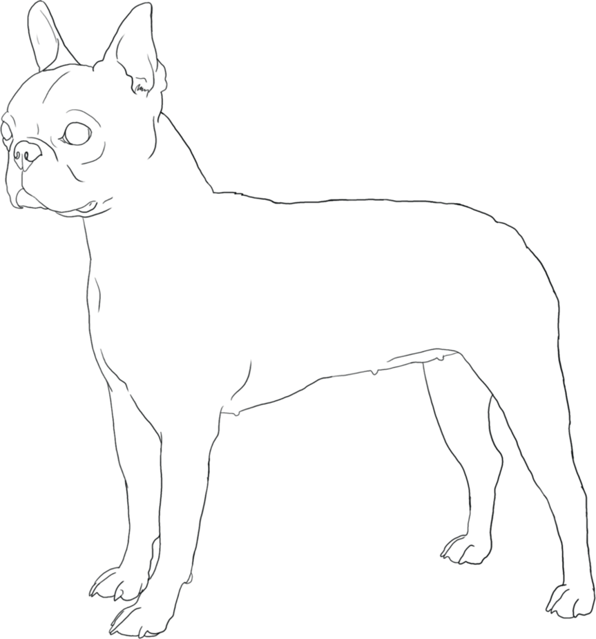 Terrier Drawing Bulldog Transparent & PNG Clipart Free ...