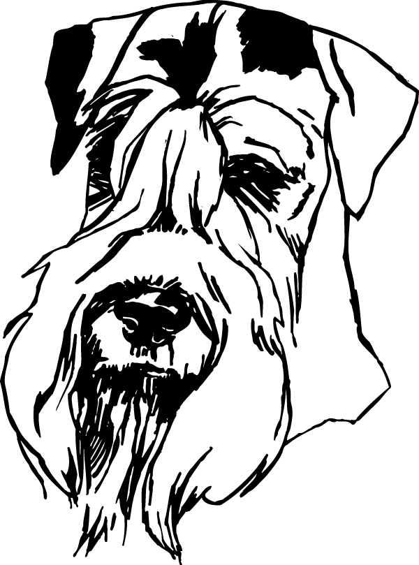 Terrier drawing head. Schnauzer view decal