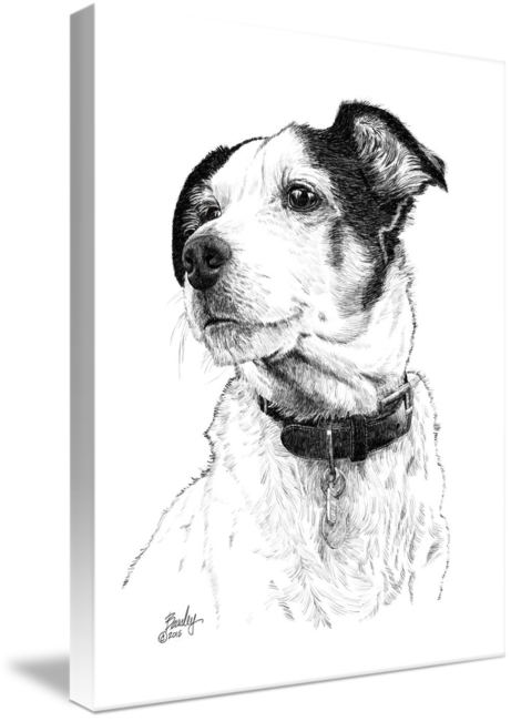 Terrier drawing ink. Sammy jack russell pen