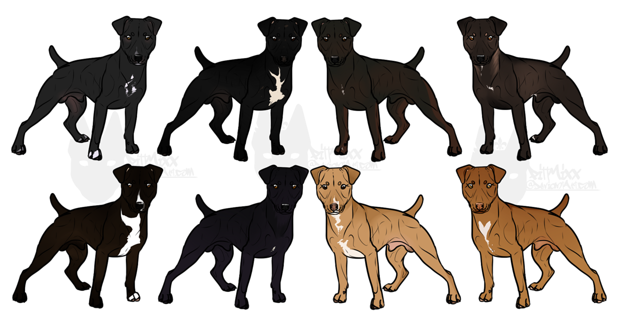 Terrier drawing patterdale. Imports open by canispitbull
