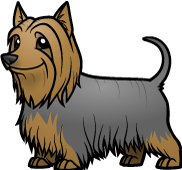 Terrier drawing silky. Choose a pet