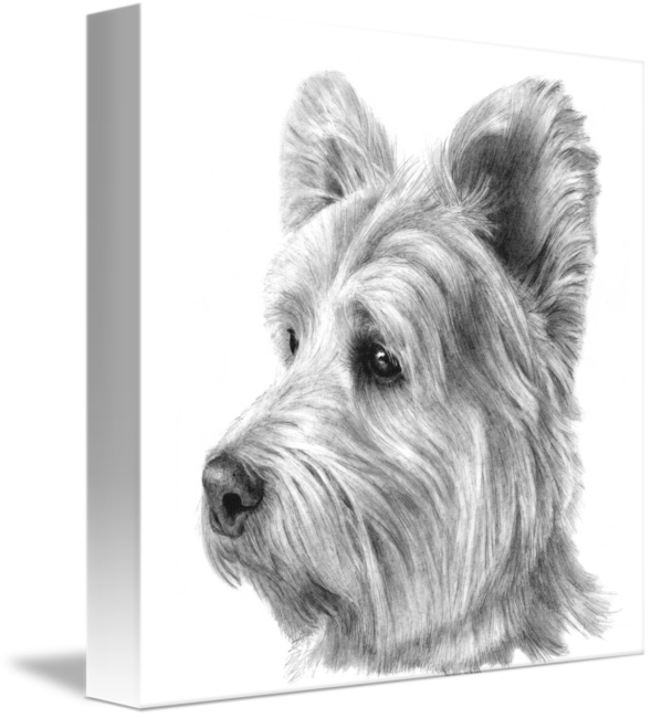 Terrier drawing west highland. White westie by susan