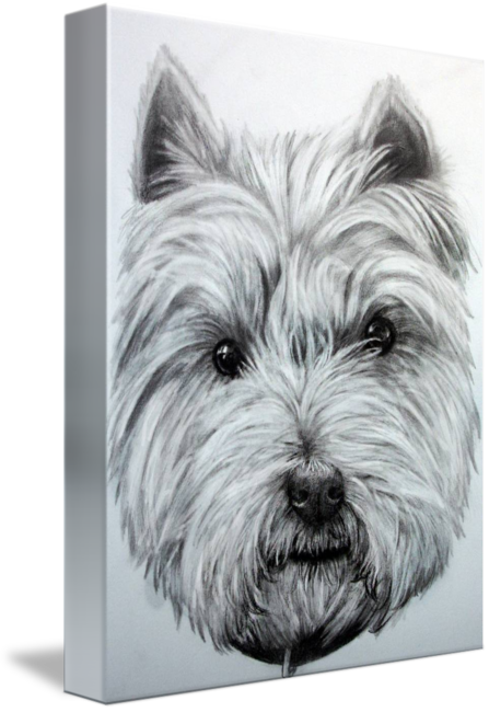 Terrier drawing head. West highland by donna