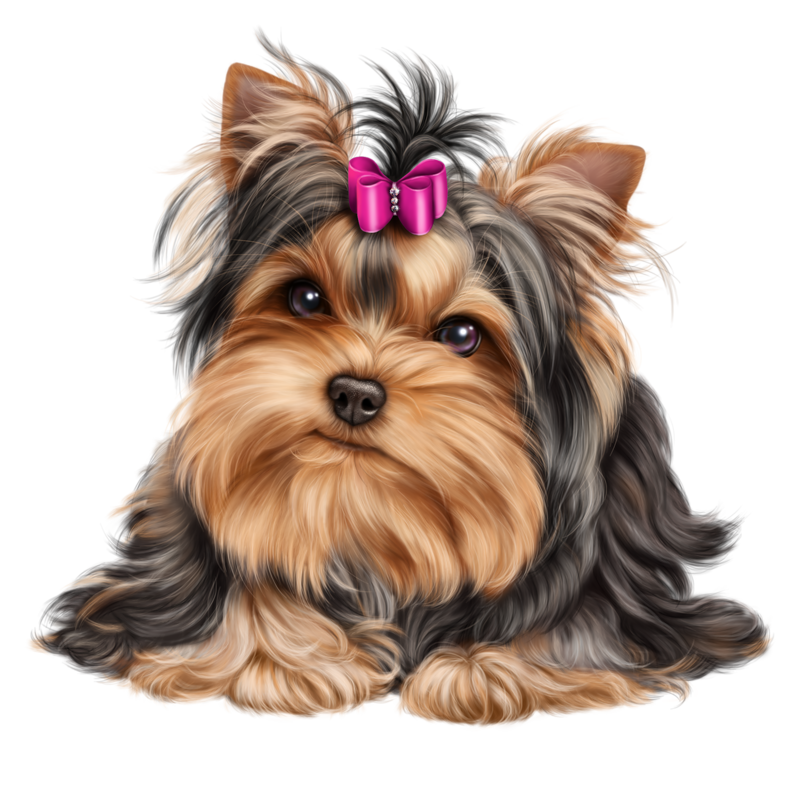 Terrier drawing yorkie poo. Liveinternet puppy images