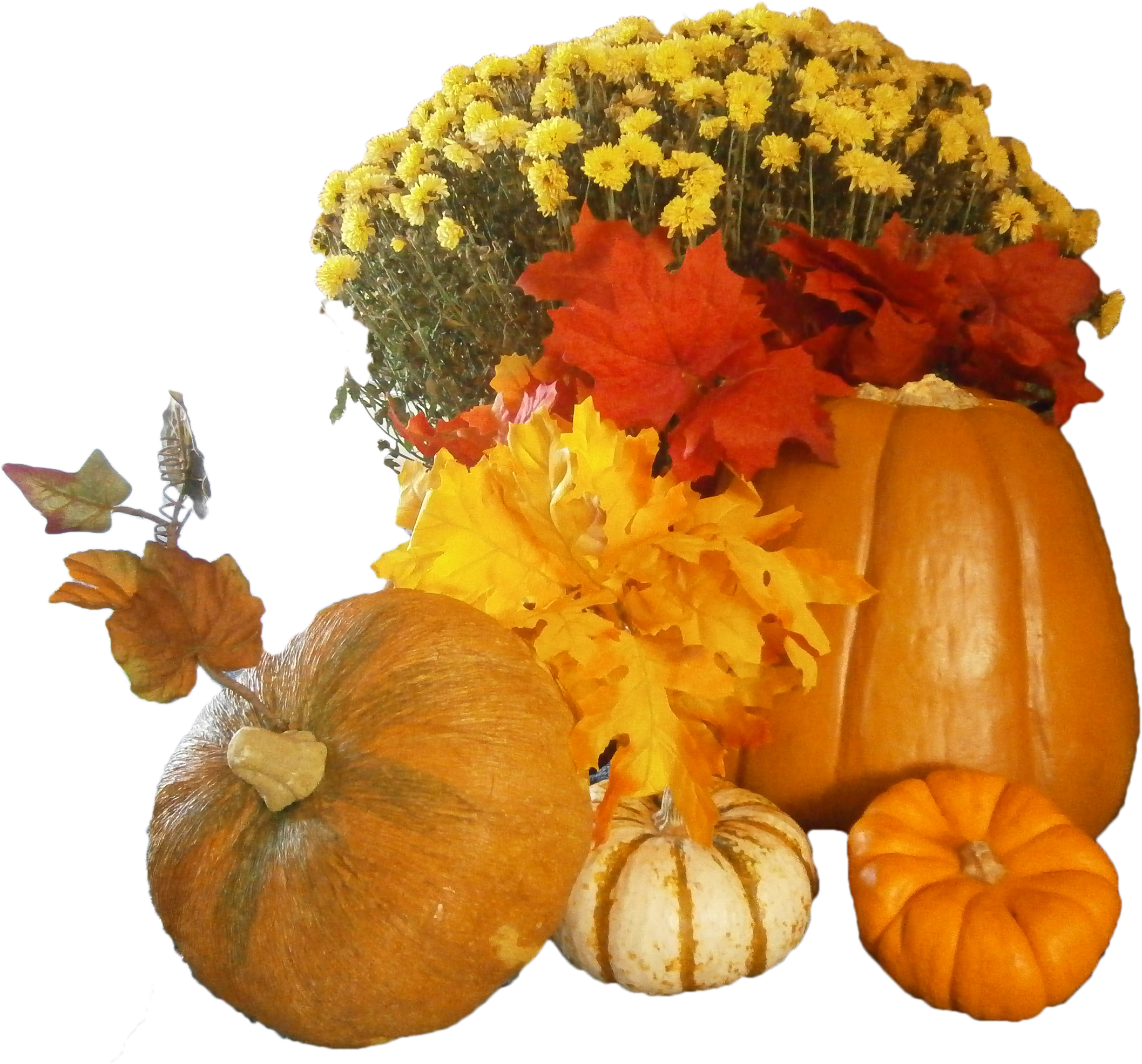 Thanksgiving background png. Free day images all