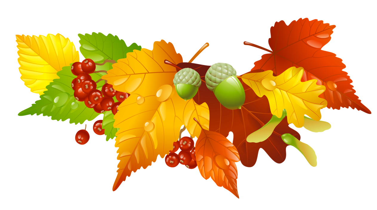 Acorn transparent thanksgiving. Leaves free encode clipart