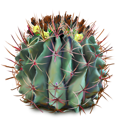 free plants flowers. Cactus flower png picture black and white library
