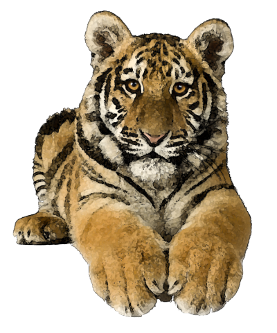 Tiger clipart kid. Clipartaz free collection transparent