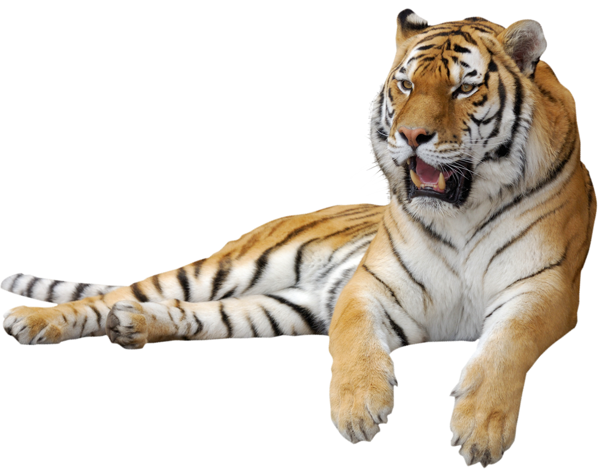 Tiger clipart png. Picture gallery yopriceville high