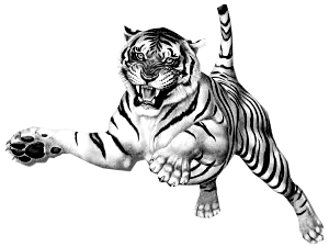 Tiger clipart png. Jumping transparent stickpng