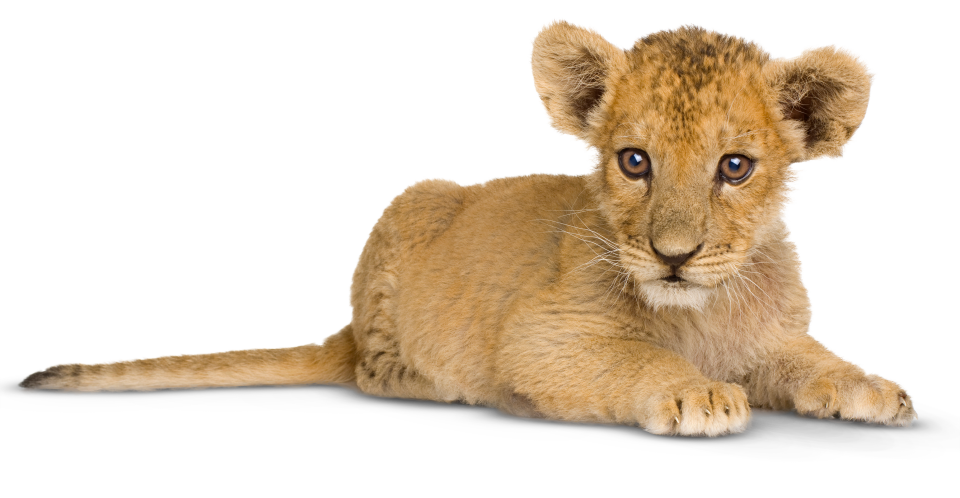 Lion. Facts for kids information
