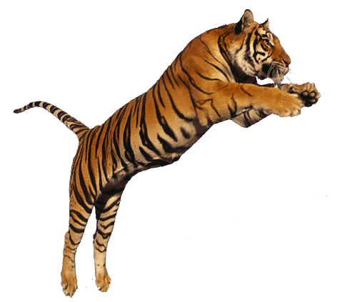 Png photo. Collection clipart tiger free