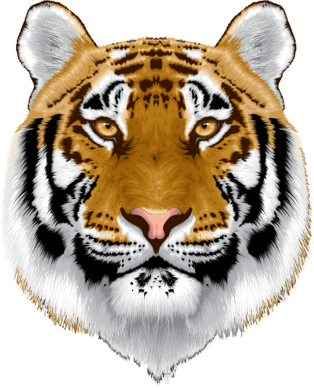 Tiger head png. Photo gallery of