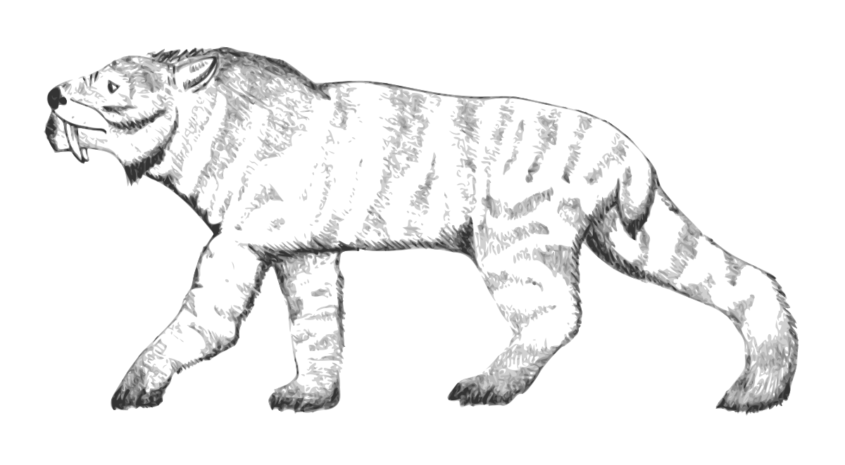 Tigers drawing saber tooth tiger. Ennedi wikipedia