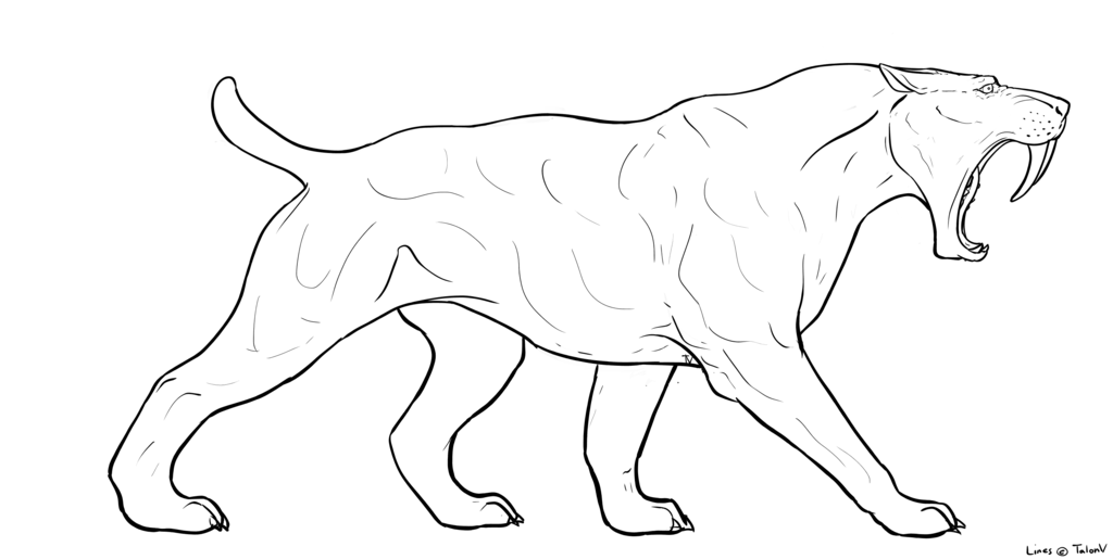 tigers drawing saber tooth tiger
