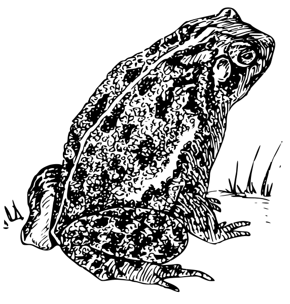 Toad clipart clip art. Free black and white