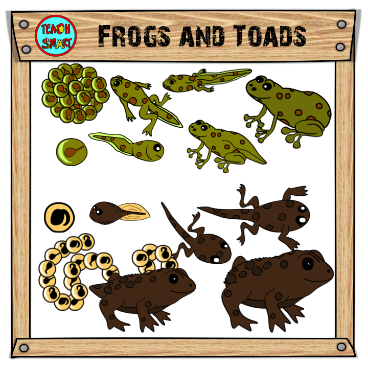 Toad clipart tadpole. Frogs and toads life