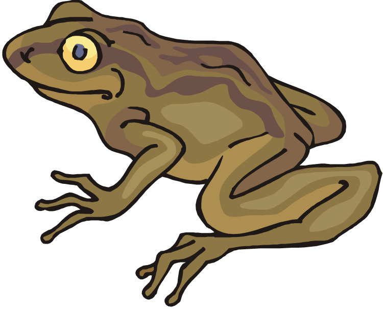 toad transparent giant