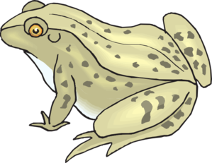 Toad clipart vector. Speckled frog clip art
