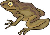 Toad clipart vector. Clip art free in