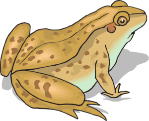 Toad clipart vector. Brown spotted frog clip