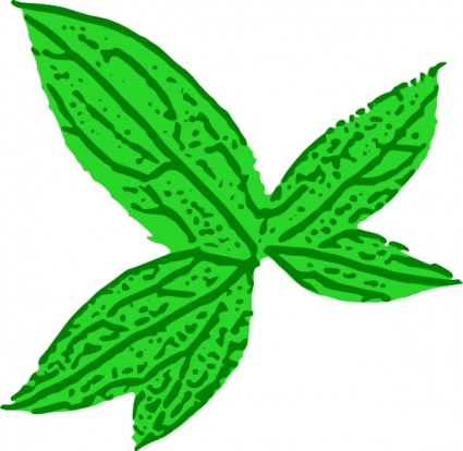 Cilpart absolutely ideas . Tobacco clipart tobacco leaf clip