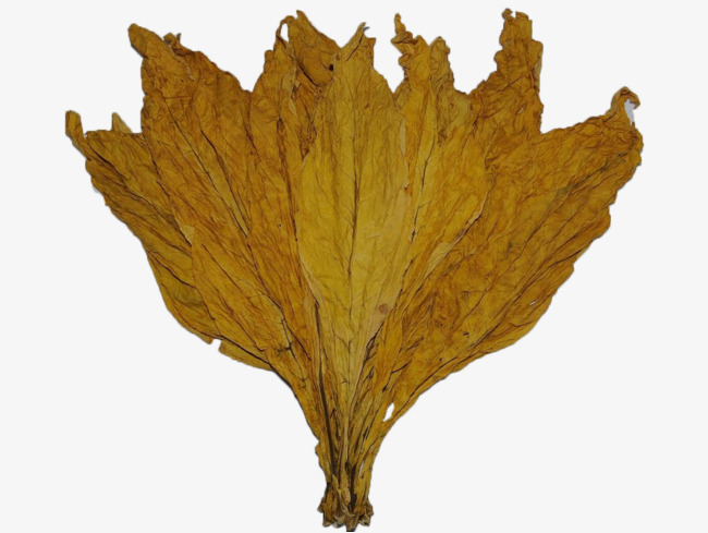 Tobacco clipart tobacco leaf. Cooked yellow png image