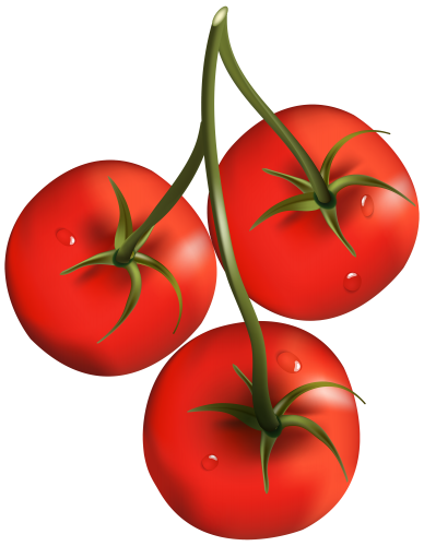 Tomato clip fruit. Branch png clipart fruits
