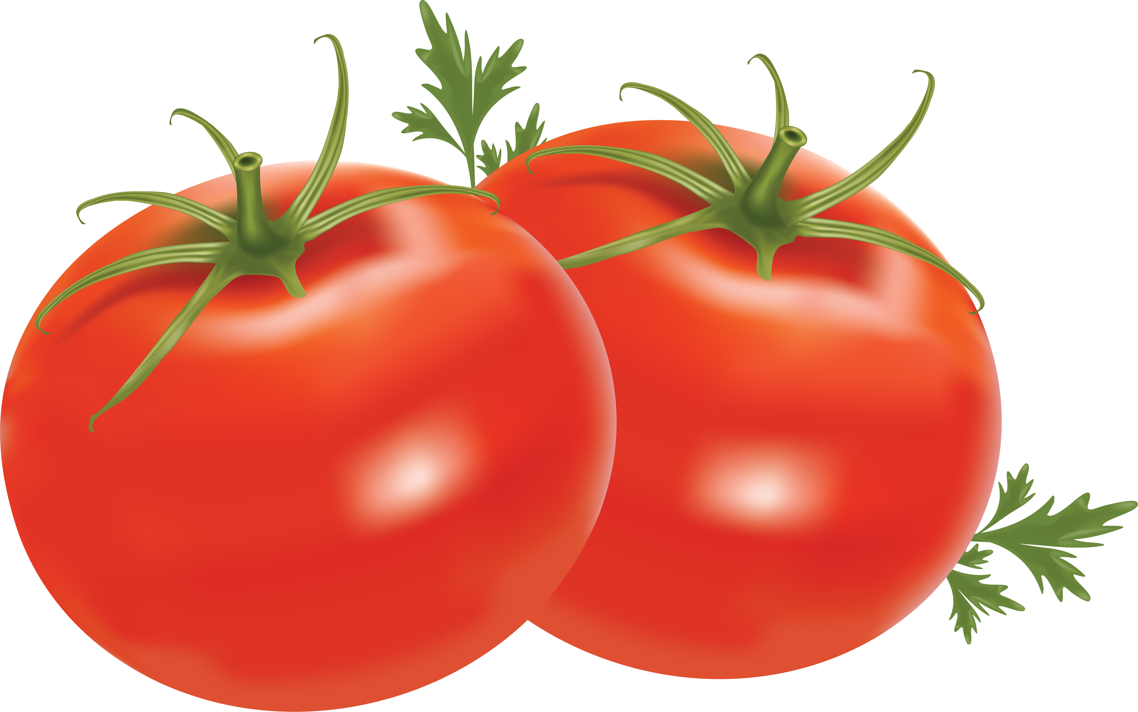 Tomato clip transparent background. Hd png images pluspng