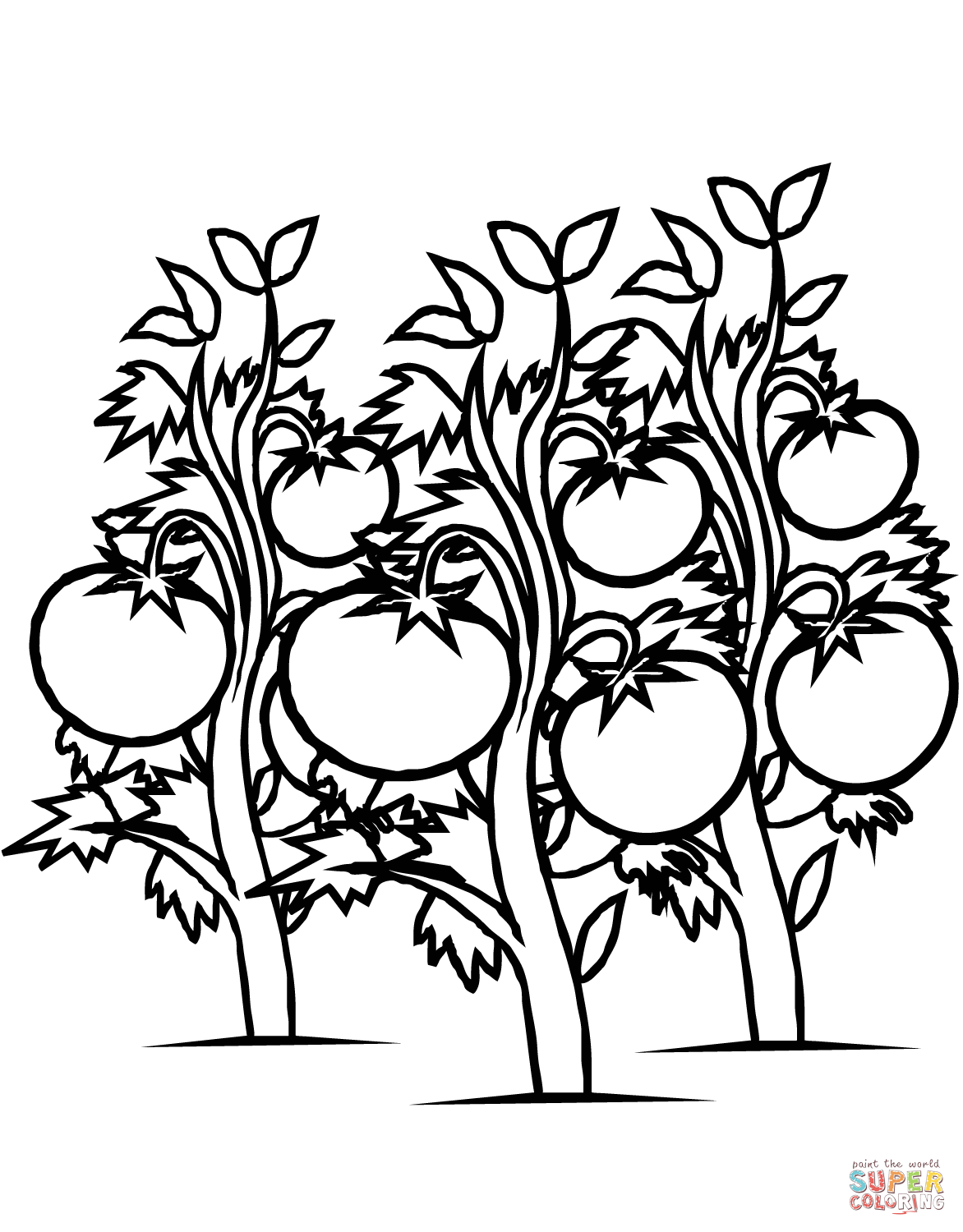 Tomato clipart eggplant plant. Tomatoes plants coloring page