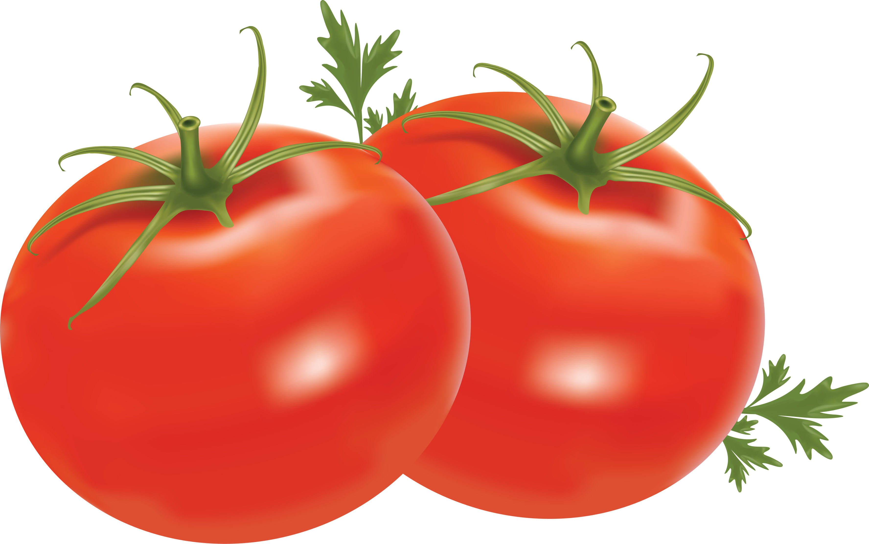 Tomato clipart two. Svg free stock