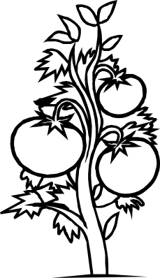 Tomatoes drawing vine. Tomato clipart black and