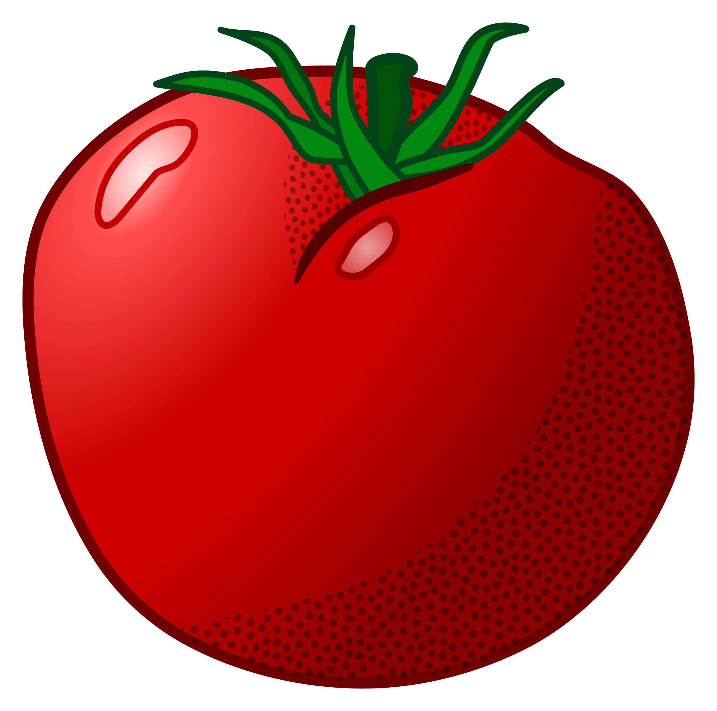 tomatoes drawing bob
