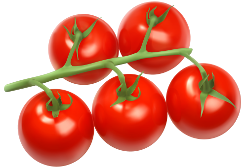 Tomato clipart tomatto. Tomatoes branch png fruits