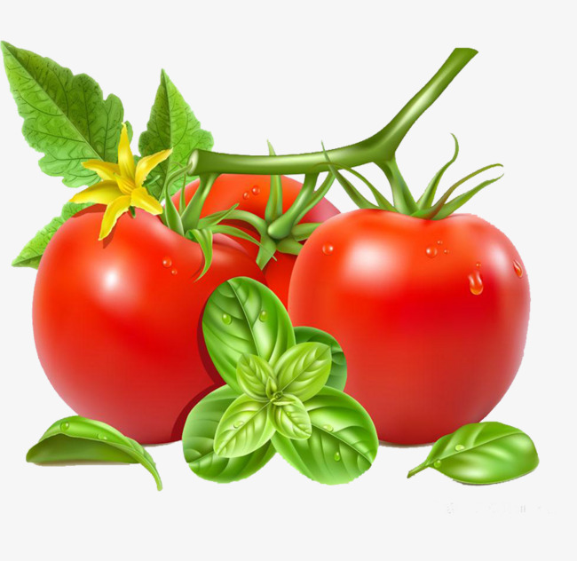 Tomato clipart two. Big tomatoes tree png