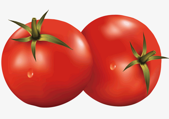 Tomato clipart two. Tomatoes vector diagram vegetables