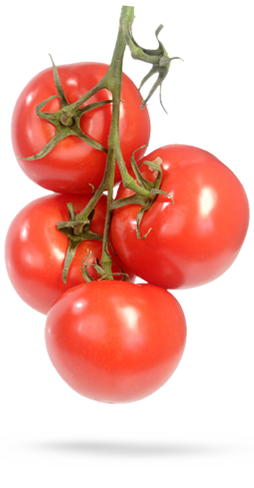 Tomato plant png. Terrific top tips for