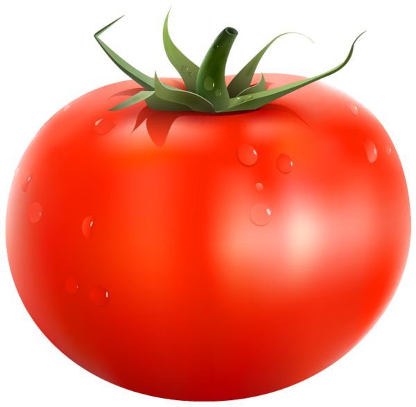 Tomatoes clipart. Tomato png picture fruits