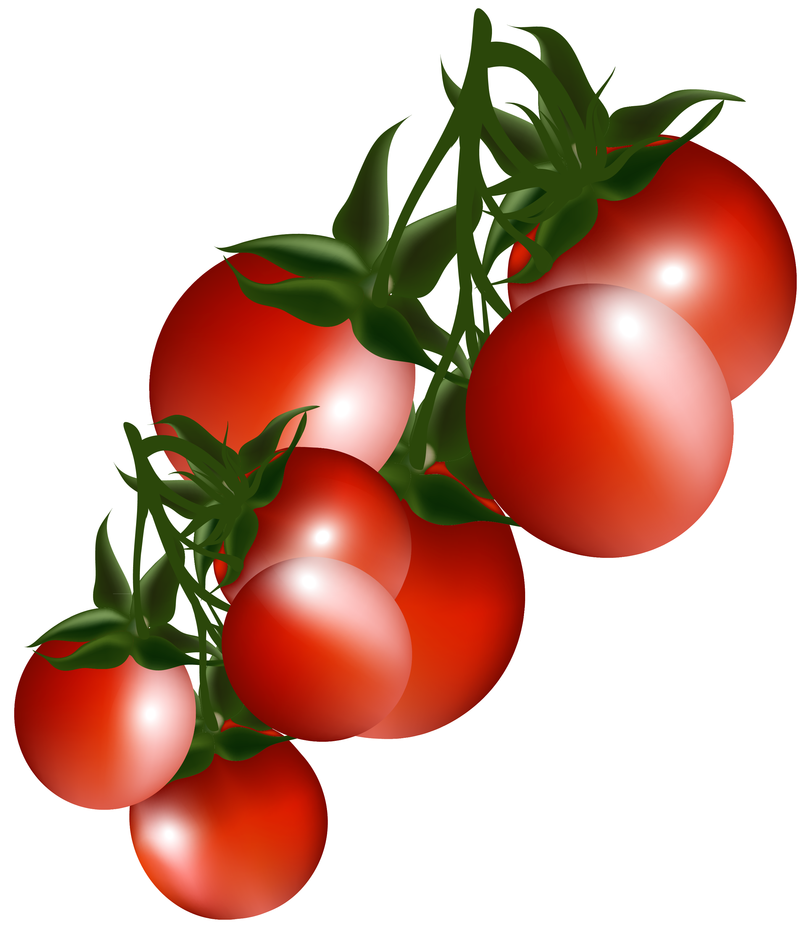 Tomato clip tomatoe. Clipart at getdrawings com